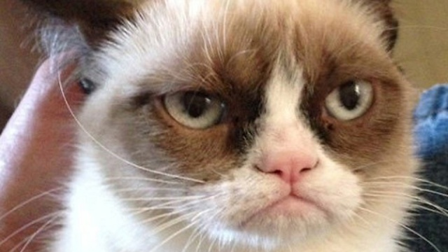 Grumpy Cat landed a movie deal this week. What did you do?
