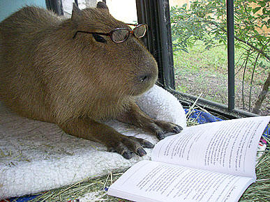 Editor capybara says to use less jargon. Photo from this squee-inspiring forum thread.